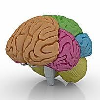 3D Brain Model