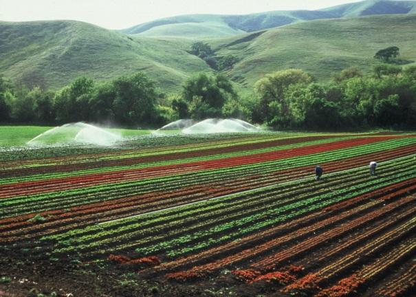 Farmland Photo