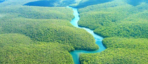 amazon-rainforest-home