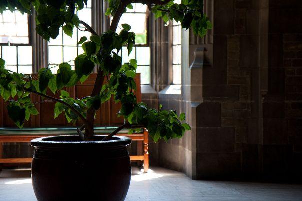 1024px-Harthouse_toronto_indoor_tree