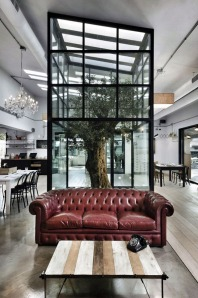 Indoor-Trees-1